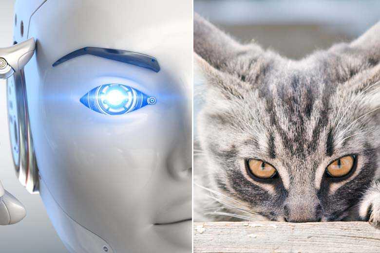 Pour le moment, les chats sont encore bien plus intelligents que l'IA la plus avancée – NeozOne